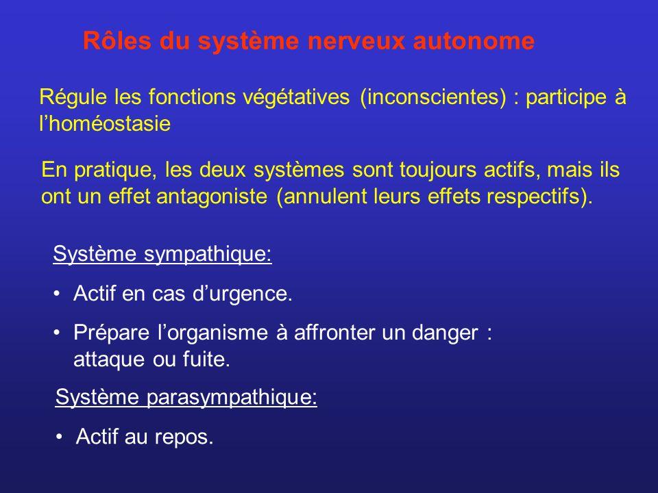 Système sympathique: Actif en cas durgence. Prépare lorganisme à affronter un danger : attaque ou fuite. Système parasympathique: Actif au repos. En p