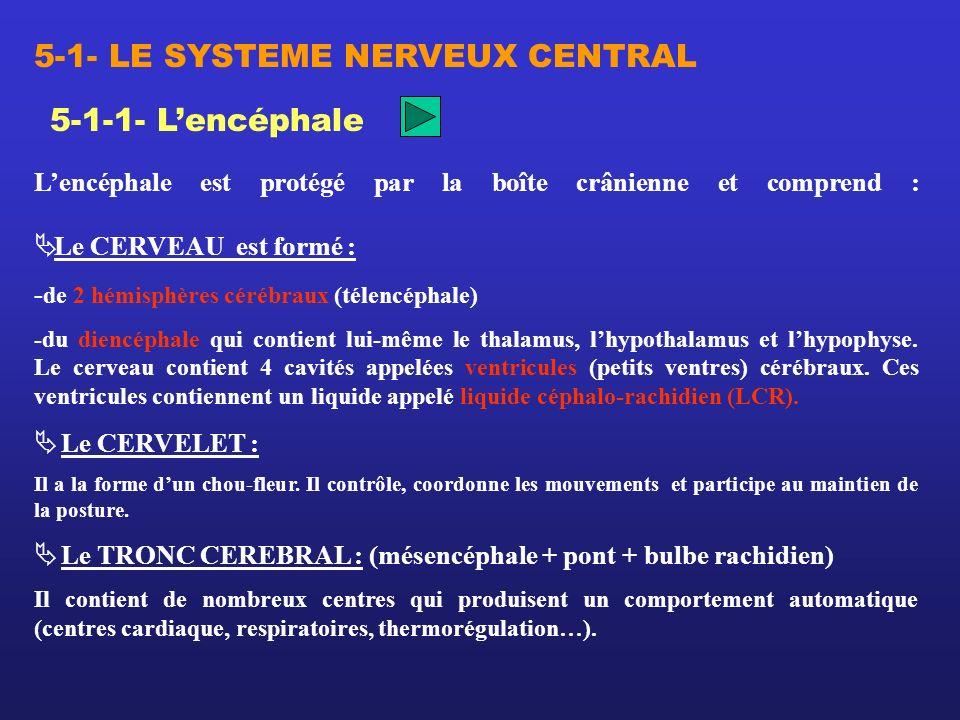 5-1-1- Lencéphale Lencéphale est protégé par la boîte crânienne et comprend : Le CERVEAU est formé : - de 2 hémisphères cérébraux (télencéphale) -du d