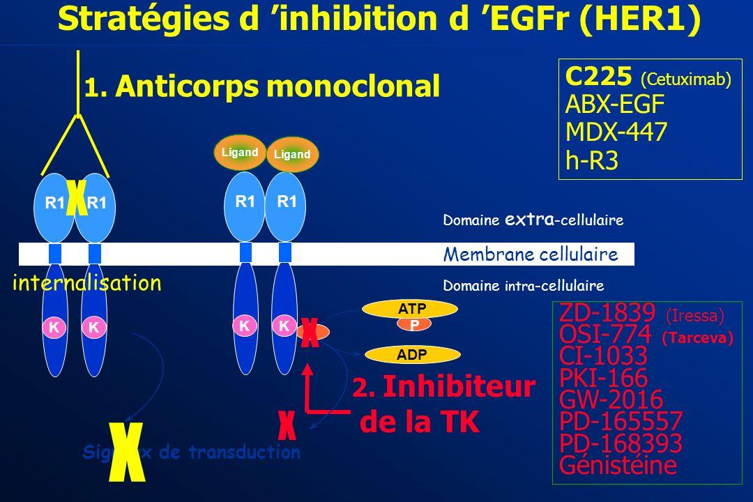 4 - L avènement des Biothérapies ciblées 2003 - 2004 Bevacizumab AC monoclonal anti - VEGF C225 ou Cetuximab (ERBITUX): AC monoclonal anti EGF - R 196