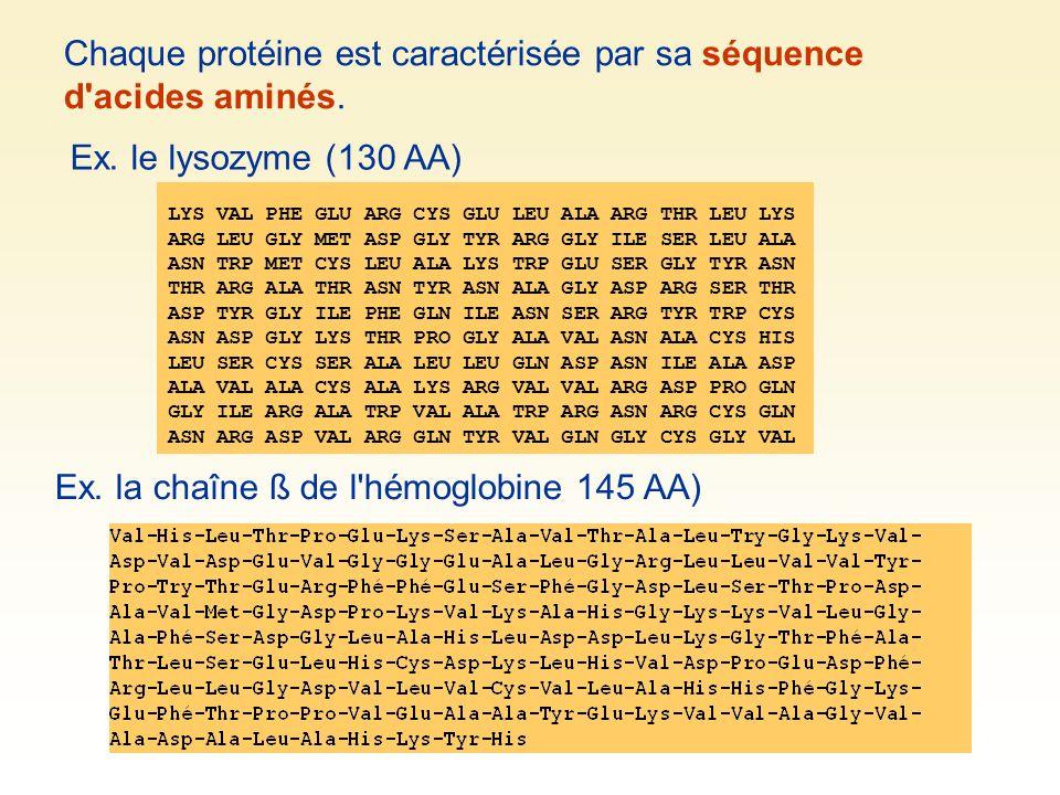 Chaque protéine est caractérisée par sa séquence d'acides aminés. Ex. la chaîne ß de l'hémoglobine 145 AA) Ex. le lysozyme (130 AA) LYS VAL PHE GLU AR