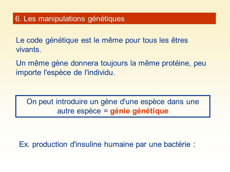 6. Les manipulations génétiques Le code génétique est le même pour tous les êtres vivants. Un même gène donnera toujours la même protéine, peu importe