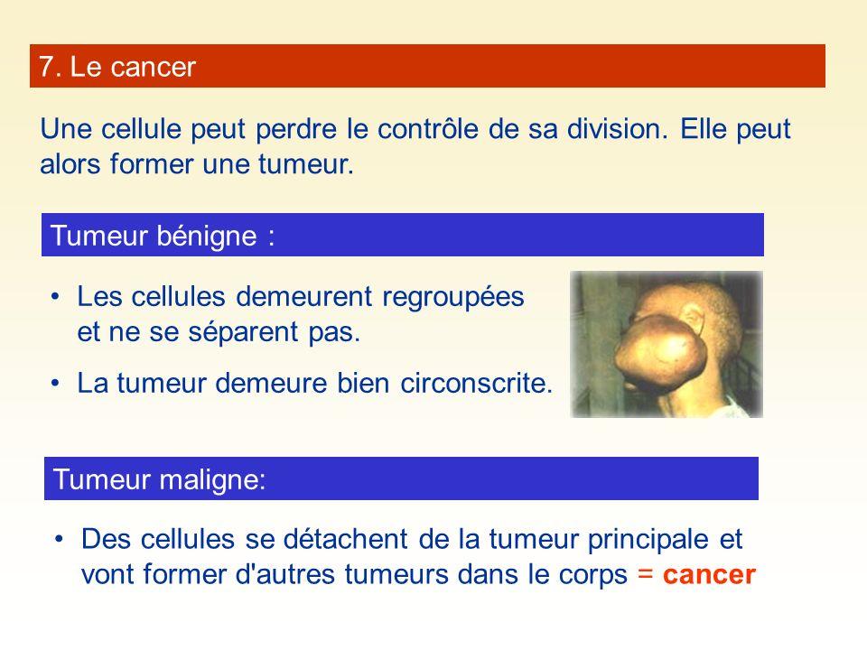 7. Le cancer Une cellule peut perdre le contrôle de sa division. Elle peut alors former une tumeur. Tumeur bénigne : Les cellules demeurent regroupées