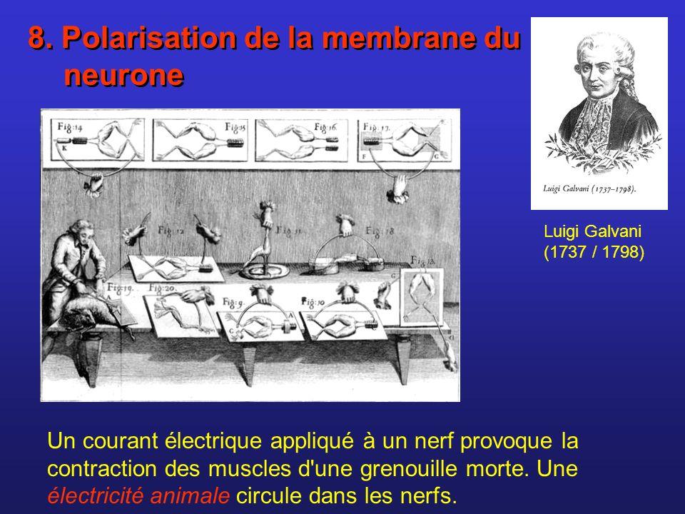 Luigi Galvani (1737 / 1798) Un courant électrique appliqué à un nerf provoque la contraction des muscles d'une grenouille morte. Une électricité anima