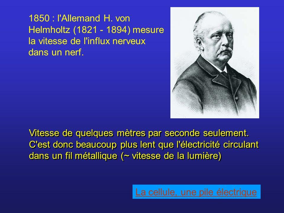 1850 : l'Allemand H. von Helmholtz (1821 - 1894) mesure la vitesse de l'influx nerveux dans un nerf. Vitesse de quelques mètres par seconde seulement.