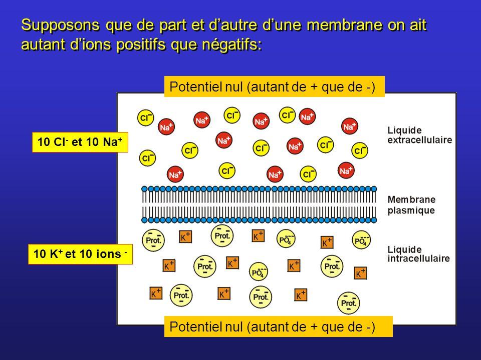Supposons que de part et dautre dune membrane on ait autant dions positifs que négatifs: 10 Cl - et 10 Na + 10 K + et 10 ions - Potentiel nul (autant