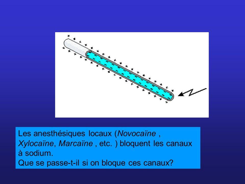 Les anesthésiques locaux (Novocaïne, Xylocaïne, Marcaïne, etc. ) bloquent les canaux à sodium. Que se passe-t-il si on bloque ces canaux?