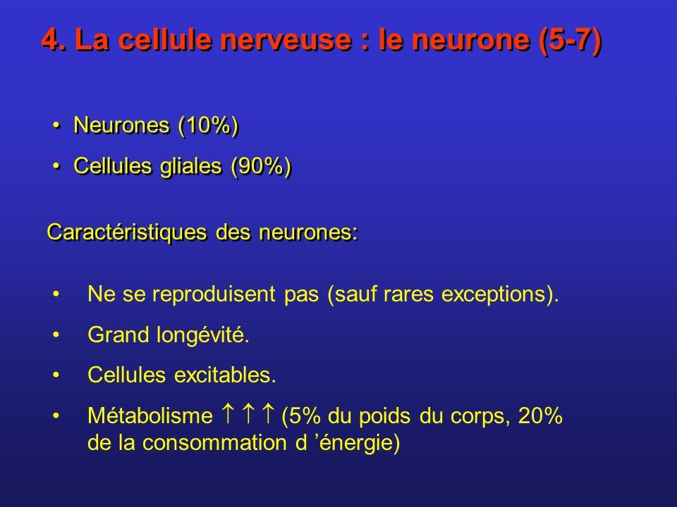 4. La cellule nerveuse : le neurone (5-7) Neurones (10%) Cellules gliales (90%) Neurones (10%) Cellules gliales (90%) Ne se reproduisent pas (sauf rar