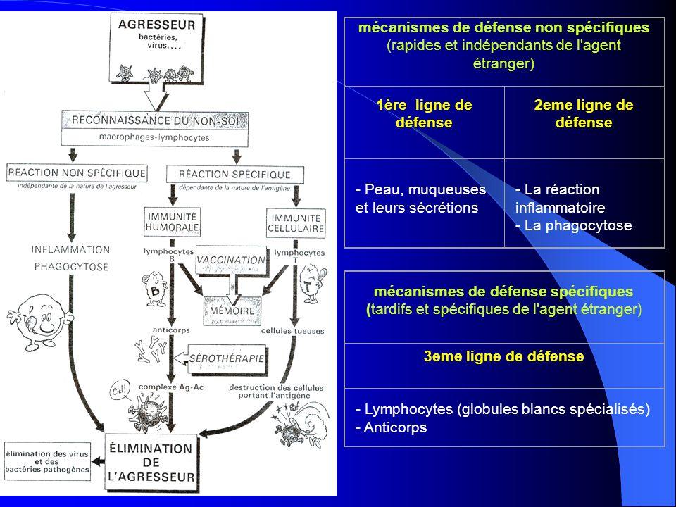 mécanismes de défense non spécifiques (rapides et indépendants de l'agent étranger) 1ère ligne de défense 2eme ligne de défense - Peau, muqueuses et l