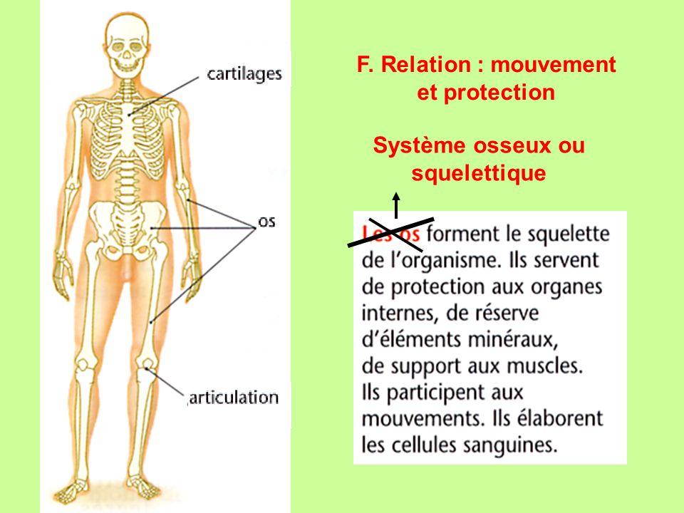 F. Relation : mouvement et protection Système osseux ou squelettique