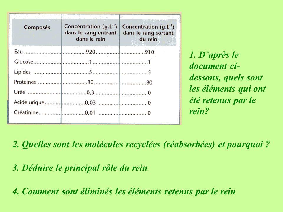 1. Daprès le document ci- dessous, quels sont les éléments qui ont été retenus par le rein? 2. Quelles sont les molécules recyclées (réabsorbées) et p