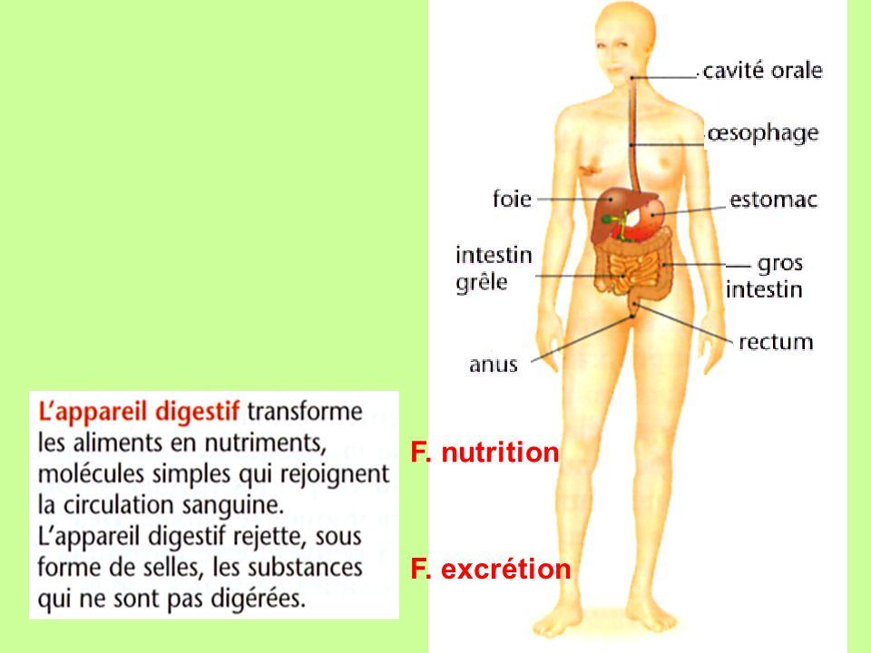 pancréas Vésicule biliaire appendice Canal cholédoque cæcum Appareil digestif déroulé