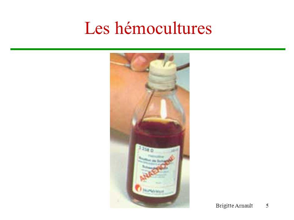 Brigitte Arnault5 Les hémocultures