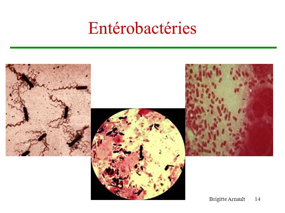 Brigitte Arnault14 Entérobactéries