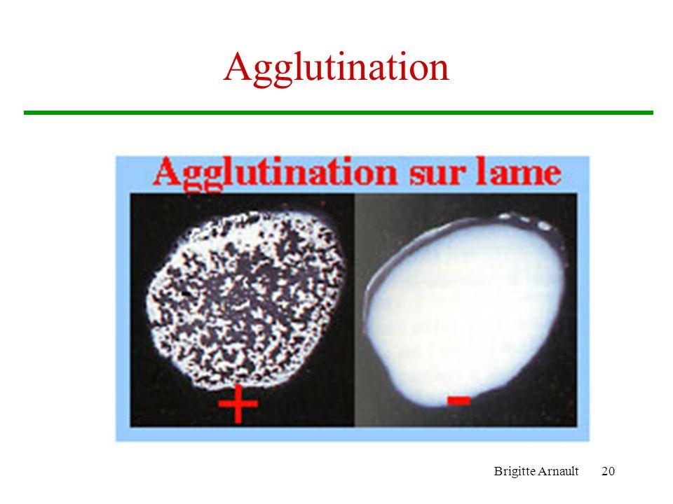 Brigitte Arnault20 Agglutination