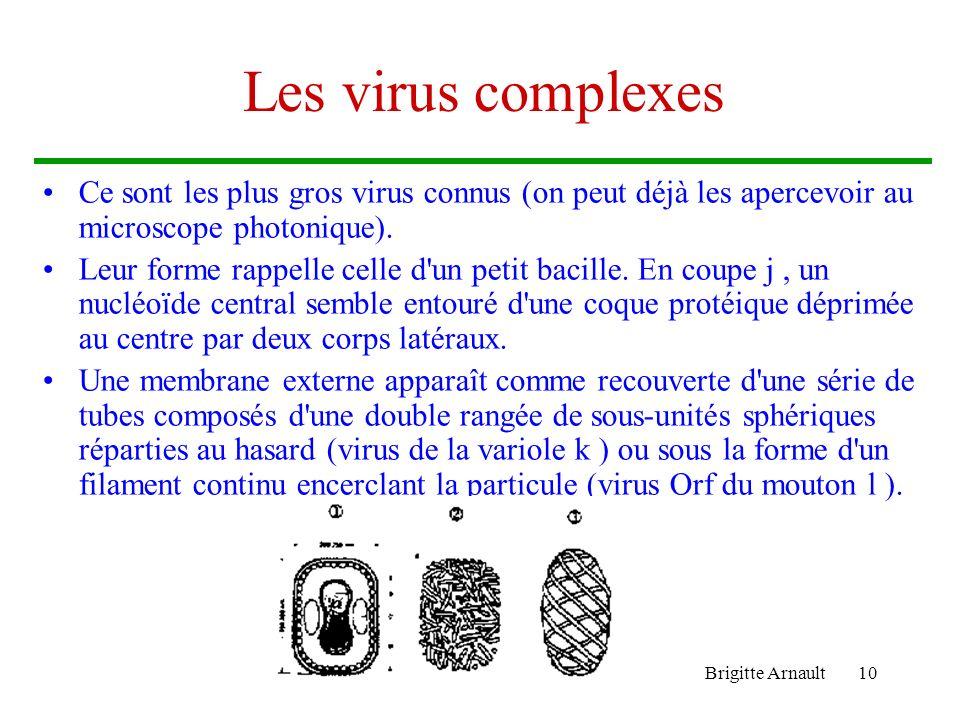 Brigitte Arnault10 Les virus complexes Ce sont les plus gros virus connus (on peut déjà les apercevoir au microscope photonique). Leur forme rappelle