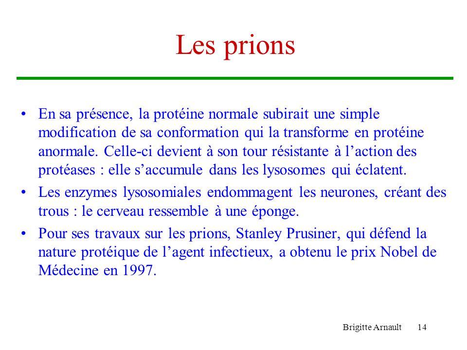 Brigitte Arnault14 Les prions En sa présence, la protéine normale subirait une simple modification de sa conformation qui la transforme en protéine an