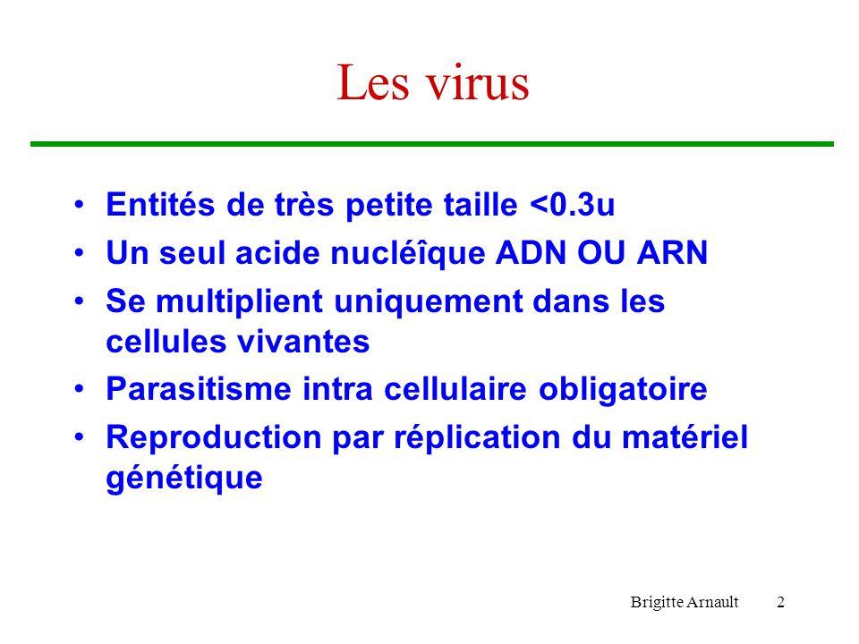 Brigitte Arnault2 Les virus Entités de très petite taille <0.3u Un seul acide nucléîque ADN OU ARN Se multiplient uniquement dans les cellules vivante