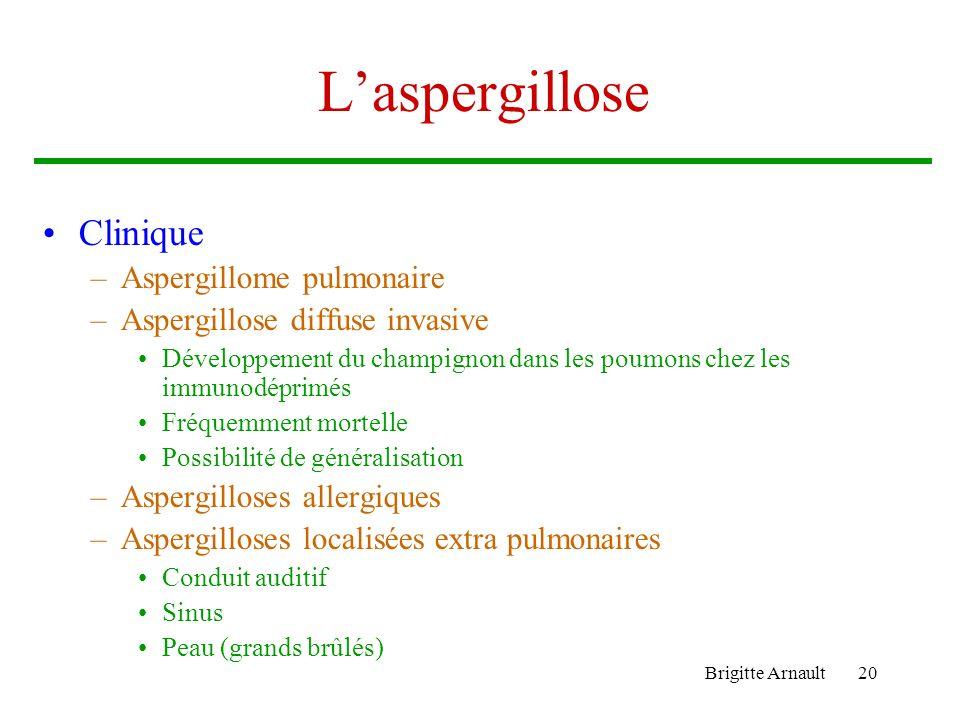 Brigitte Arnault20 Laspergillose Clinique –Aspergillome pulmonaire –Aspergillose diffuse invasive Développement du champignon dans les poumons chez le