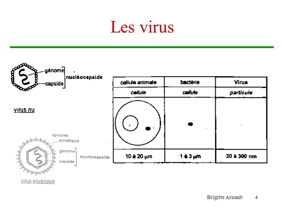 Brigitte Arnault4 Les virus