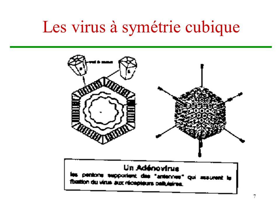Brigitte Arnault7 Les virus à symétrie cubique