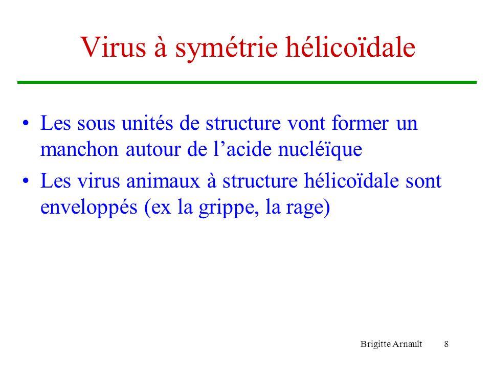 Brigitte Arnault8 Virus à symétrie hélicoïdale Les sous unités de structure vont former un manchon autour de lacide nucléïque Les virus animaux à stru