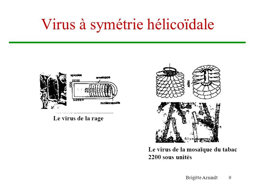 Brigitte Arnault9 Virus à symétrie hélicoïdale Le virus de la mosaïque du tabac 2200 sous unités Le virus de la rage