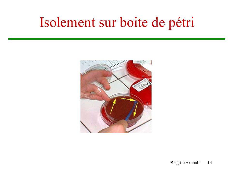 Brigitte Arnault14 Isolement sur boite de pétri