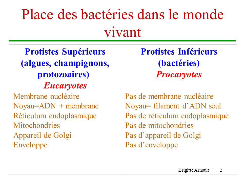 Brigitte Arnault2 Place des bactéries dans le monde vivant Protistes Supérieurs (algues, champignons, protozoaires) Eucaryotes Protistes Inférieurs (b