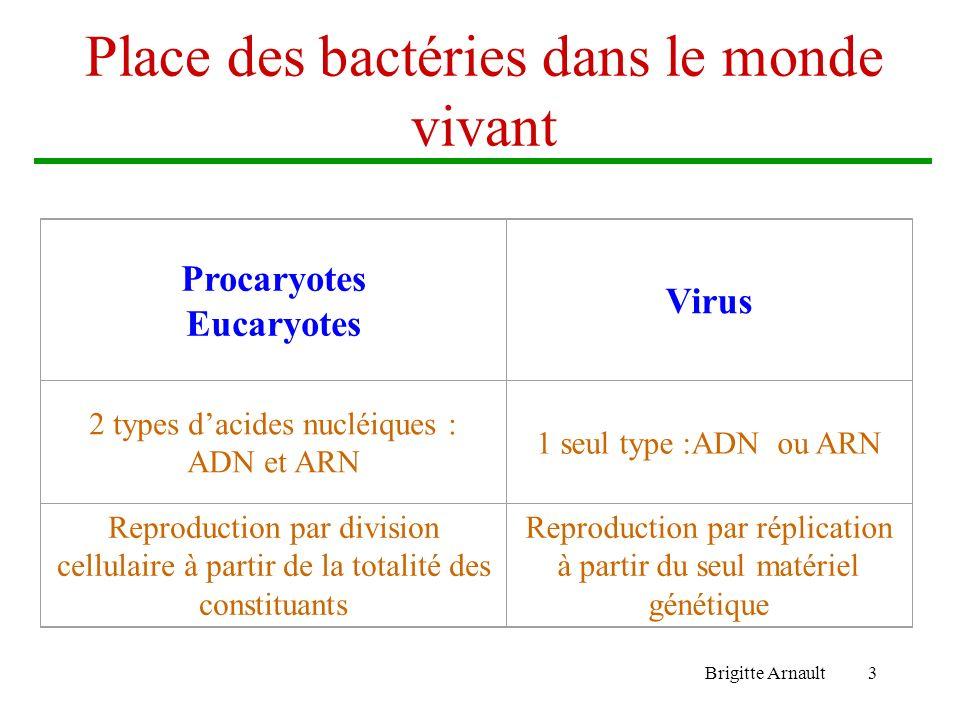 Brigitte Arnault3 Place des bactéries dans le monde vivant Procaryotes Eucaryotes Virus 2 types dacides nucléiques : ADN et ARN 1 seul type :ADN ou AR
