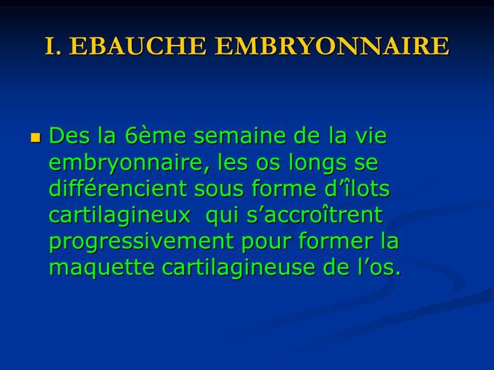 I. EBAUCHE EMBRYONNAIRE Des la 6ème semaine de la vie embryonnaire, les os longs se différencient sous forme dîlots cartilagineux qui saccroîtrent pro