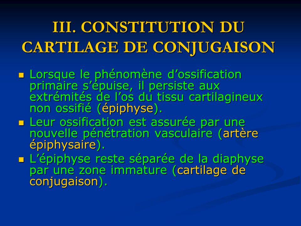 III. CONSTITUTION DU CARTILAGE DE CONJUGAISON Lorsque le phénomène dossification primaire sépuise, il persiste aux extrémités de los du tissu cartilag