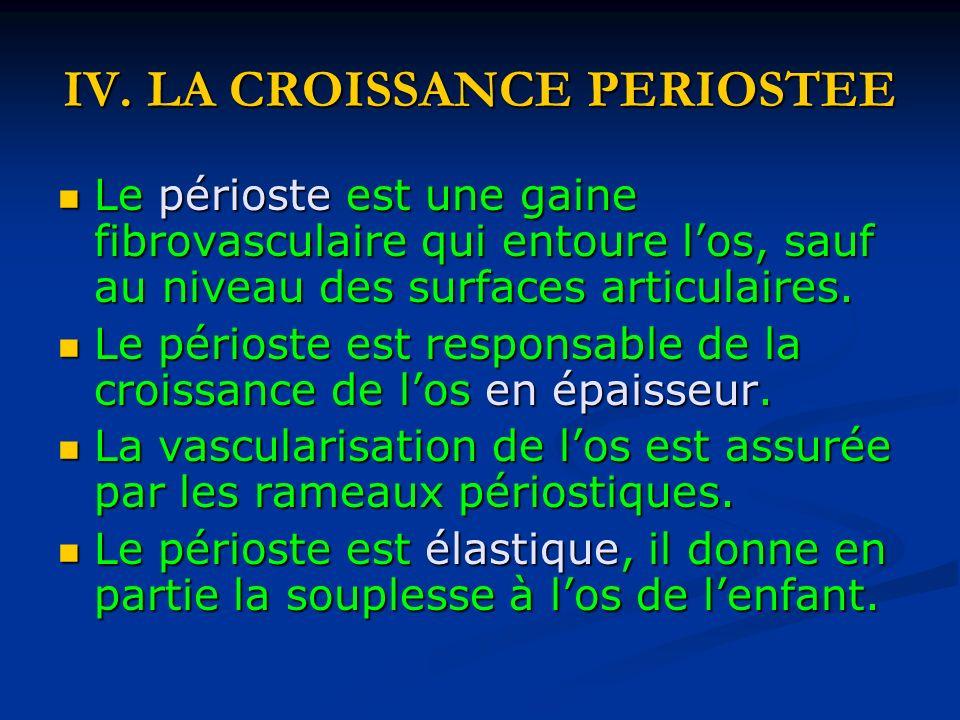 IV. LA CROISSANCE PERIOSTEE Le périoste est une gaine fibrovasculaire qui entoure los, sauf au niveau des surfaces articulaires. Le périoste est une g