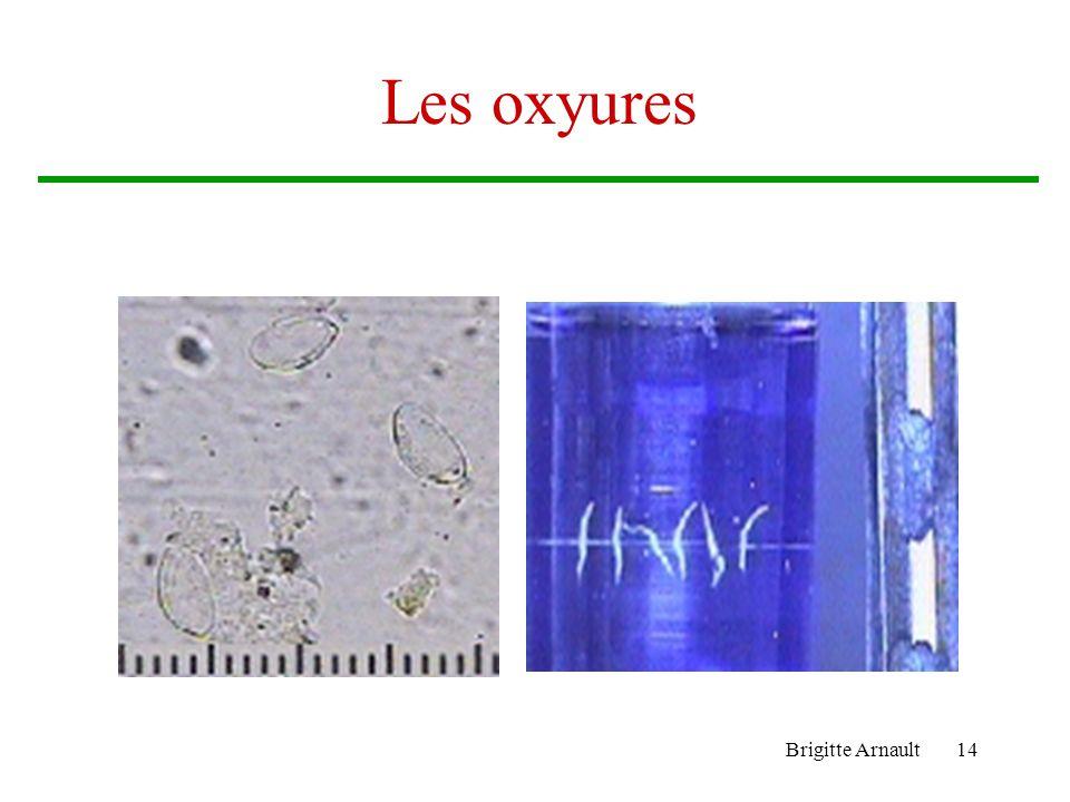 Brigitte Arnault14 Les oxyures