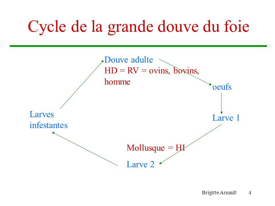 Brigitte Arnault4 Cycle de la grande douve du foie oeufs Douve adulte HD = RV = ovins, bovins, homme Larve 1 Larves infestantes Mollusque = HI Larve 2