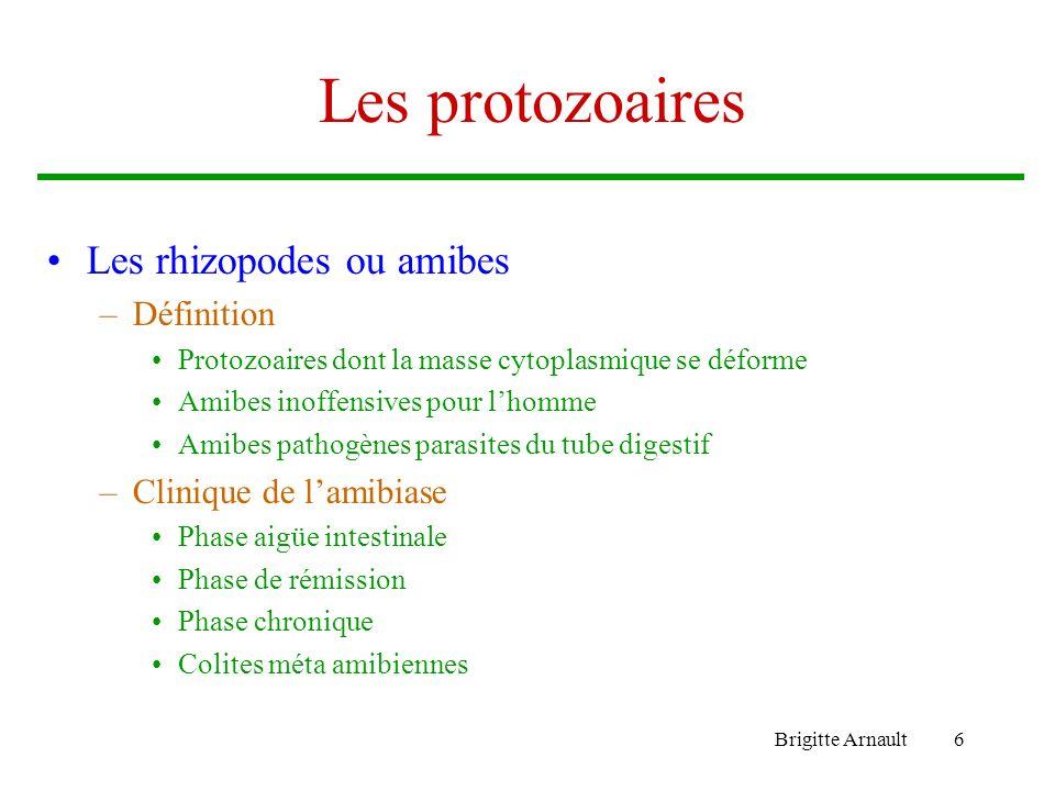 Brigitte Arnault6 Les protozoaires Les rhizopodes ou amibes –Définition Protozoaires dont la masse cytoplasmique se déforme Amibes inoffensives pour l