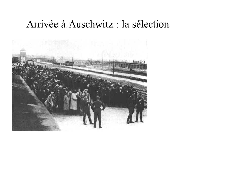 Arrivée à Auschwitz : la sélection