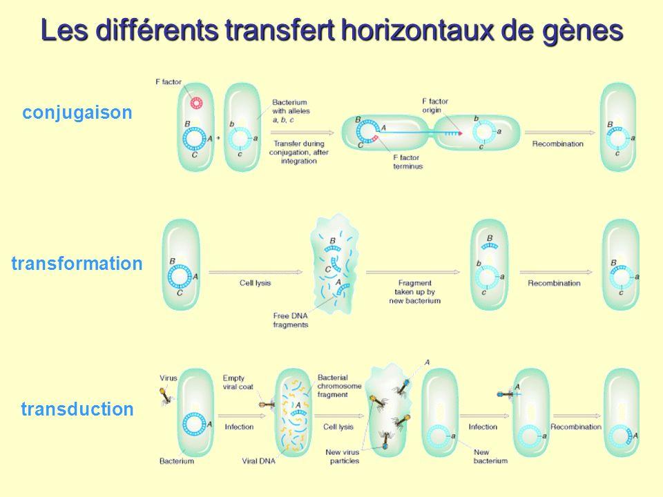 Les différents transfert horizontaux de gènes conjugaison transformation transduction