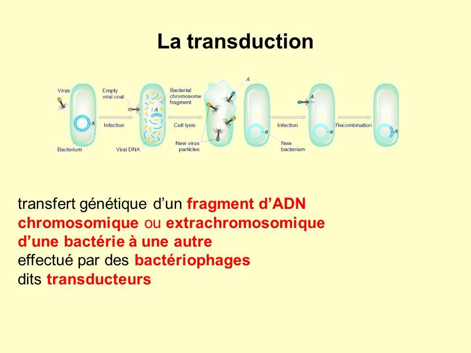 La transduction transfert génétique dun fragment dADN chromosomique ou extrachromosomique dune bactérie à une autre effectué par des bactériophages di