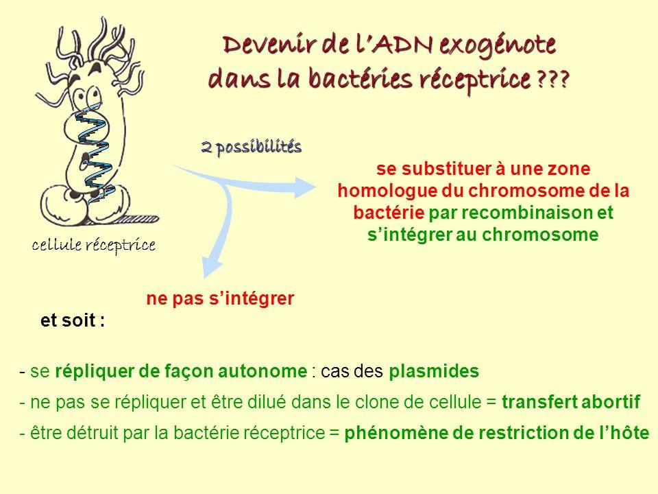 cellule réceptrice Devenir de lADN exogénote dans la bactéries réceptrice ??? 2 possibilités se substituer à une zone homologue du chromosome de la ba