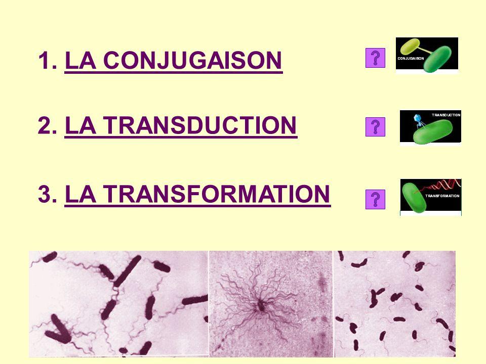 1. LA CONJUGAISON 3. LA TRANSFORMATION 2. LA TRANSDUCTION