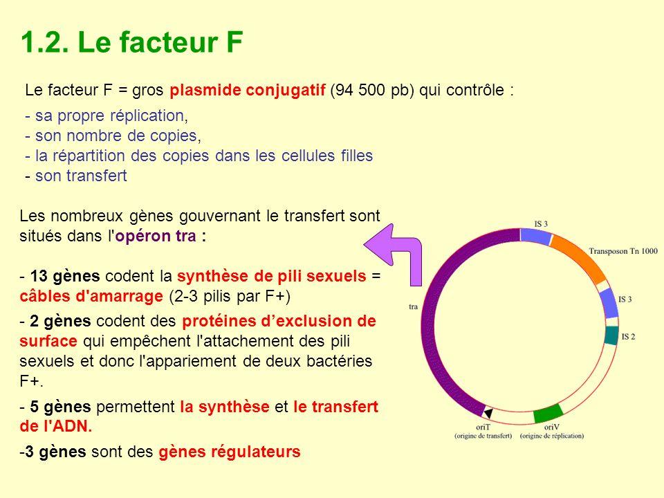1.2. Le facteur F Le facteur F = gros plasmide conjugatif (94 500 pb) qui contrôle : - sa propre réplication, - son nombre de copies, - la répartition