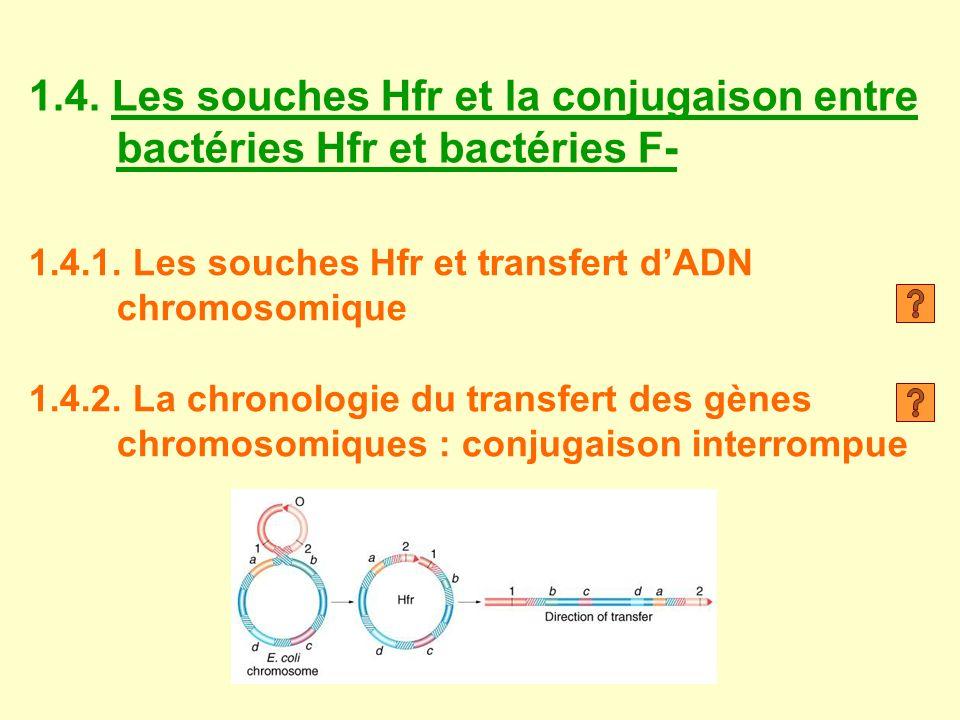 1.4. Les souches Hfr et la conjugaison entre bactéries Hfr et bactéries F- 1.4.1. Les souches Hfr et transfert dADN chromosomique 1.4.2. La chronologi