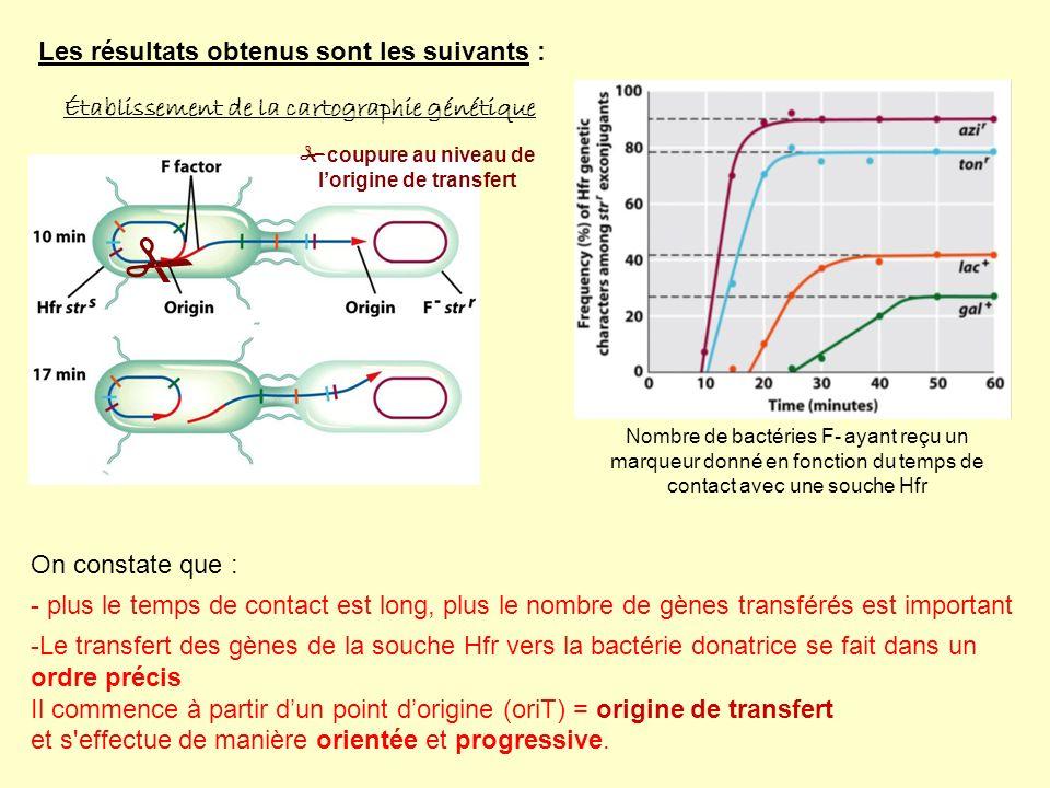 Les résultats obtenus sont les suivants : Établissement de la cartographie génétique Nombre de bactéries F- ayant reçu un marqueur donné en fonction du temps de contact avec une souche Hfr On constate que : - plus le temps de contact est long, plus le nombre de gènes transférés est important -Le transfert des gènes de la souche Hfr vers la bactérie donatrice se fait dans un ordre précis Il commence à partir dun point dorigine (oriT) = origine de transfert et s effectue de manière orientée et progressive.