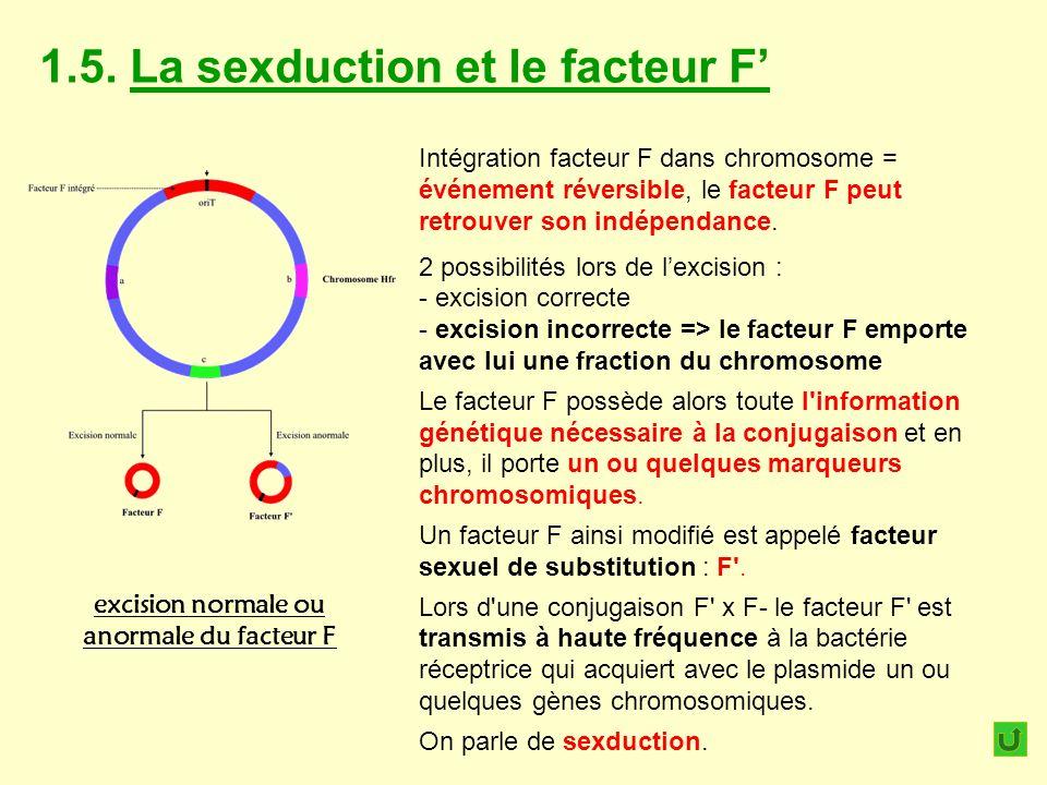 1.5. La sexduction et le facteur F excision normale ou anormale du facteur F Intégration facteur F dans chromosome = événement réversible, le facteur