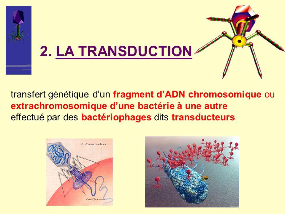 2. LA TRANSDUCTION transfert génétique dun fragment dADN chromosomique ou extrachromosomique dune bactérie à une autre effectué par des bactériophages
