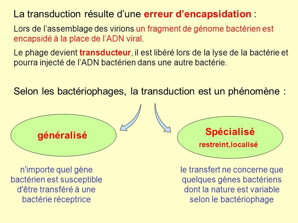 Selon les bactériophages, la transduction est un phénomène : n importe quel gène bactérien est susceptible d être transféré à une bactérie réceptrice le transfert ne concerne que quelques gènes bactériens dont la nature est variable selon le bactériophage généralisé Spécialisé restreint,localisé La transduction résulte dune erreur dencapsidation : Lors de lassemblage des virions un fragment de génome bactérien est encapsidé à la place de lADN viral.