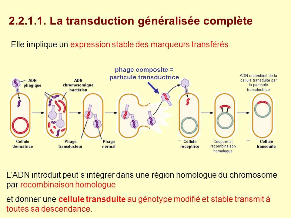 Elle implique un expression stable des marqueurs transférés. LADN introduit peut sintégrer dans une région homologue du chromosome par recombinaison h