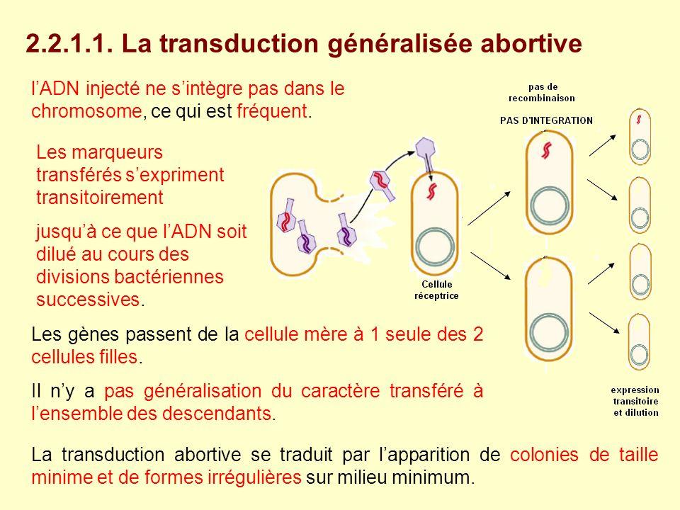 lADN injecté ne sintègre pas dans le chromosome, ce qui est fréquent. Les gènes passent de la cellule mère à 1 seule des 2 cellules filles. Il ny a pa