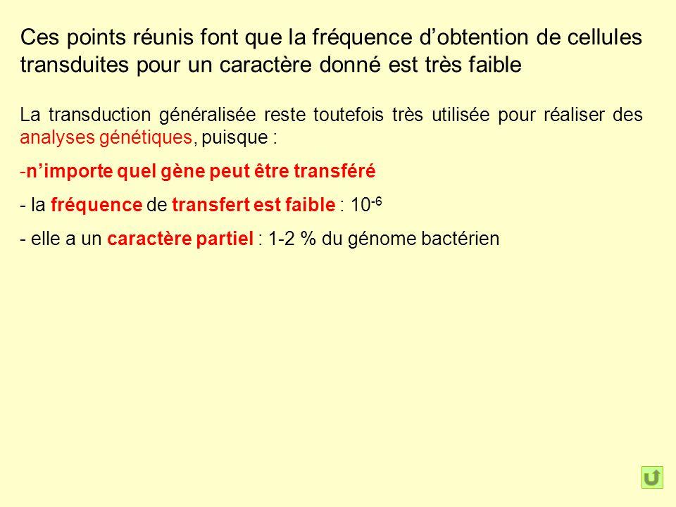 Ces points réunis font que la fréquence dobtention de cellules transduites pour un caractère donné est très faible La transduction généralisée reste toutefois très utilisée pour réaliser des analyses génétiques, puisque : -nimporte quel gène peut être transféré - la fréquence de transfert est faible : 10 -6 - elle a un caractère partiel : 1-2 % du génome bactérien