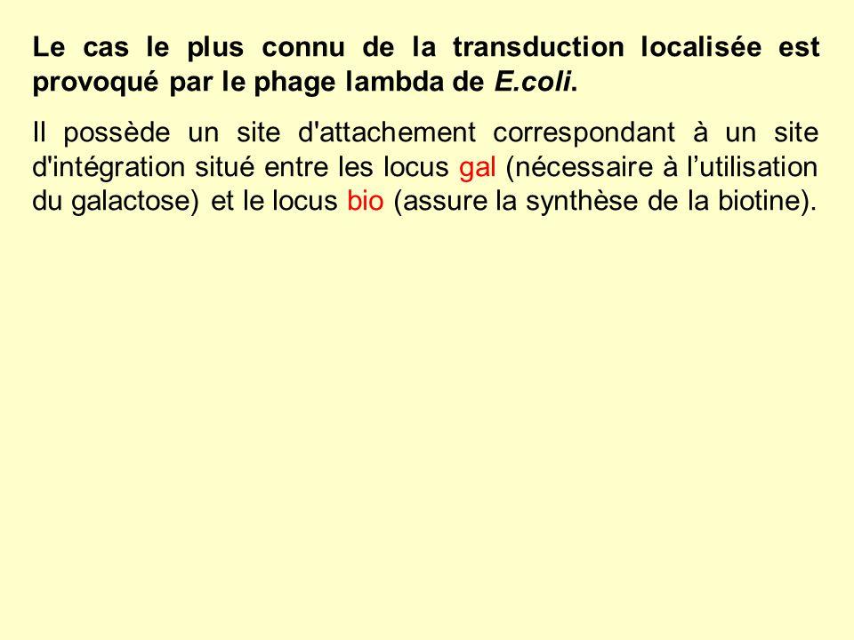 Le cas le plus connu de la transduction localisée est provoqué par le phage lambda de E.coli. Il possède un site d'attachement correspondant à un site
